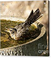 Let The Water Fly Acrylic Print