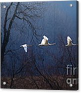 Let Your Spirit Fly Acrylic Print