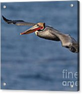 Let's Fly Acrylic Print