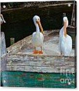 Let's Set Sail Acrylic Print