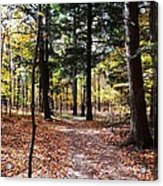 Let's Take A Walk In The Woods Acrylic Print