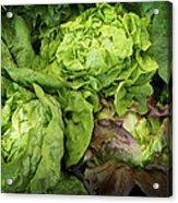 Lettuce Go Forward Acrylic Print