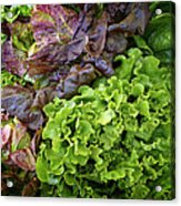 Lettuce Medley Acrylic Print
