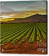 Lettuce Sunrise Acrylic Print