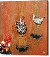 Levitating Chickens Acrylic Print