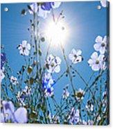 Lewis Blue Flax Backlit Acrylic Print