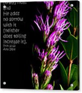Liatris On Black II Acrylic Print