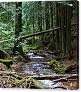 Liberty Creek 2014 #5 Acrylic Print