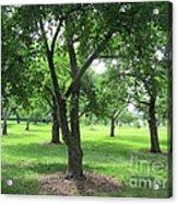 Liberty Hall - Apple Orchards Acrylic Print
