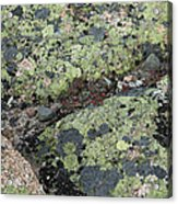 Lichen And Granite Img 6187 Acrylic Print