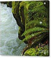 Lichen Covered Rocks With Stream In Oregon Acrylic Print