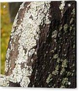 Lichen On Headstone Acrylic Print