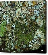 Lichen On Rock In Suck Creek Acrylic Print