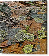 Lichens Along Trail To Plain Of Six Glaciers In Banff National Park-alberta-canada Acrylic Print