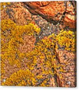 Lichens On The Shoreline Rocks 2 Acrylic Print