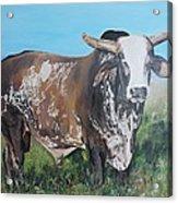 Life Between Rodeos Acrylic Print