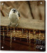 Life Can Be Tough Acrylic Print by Lois Bryan