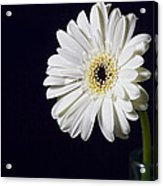 Life -  Face On Acrylic Print by Kim Andelkovic
