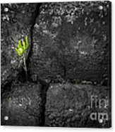 Life Finds A Way Acrylic Print