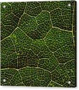 Life Grid In A Leaf Acrylic Print