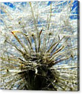 Life In Details Acrylic Print