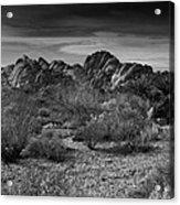Life In The Desert Acrylic Print