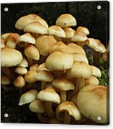 Life Of The Forest Floor Acrylic Print