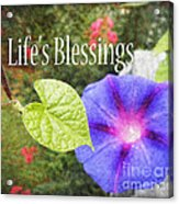 Lifes Blessings Acrylic Print