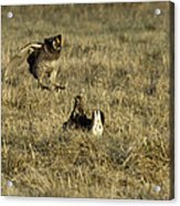 Lift Off Acrylic Print by Thomas Young