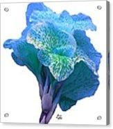 Light Blue Iris Acrylic Print