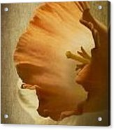 Light From Within Acrylic Print