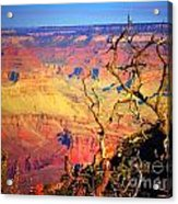 Light In The Canyon Acrylic Print