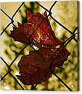 Light Leaf Links Acrylic Print