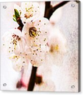 Light Of Spring 3 Acrylic Print