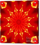 Light On A Tulip 2 Acrylic Print