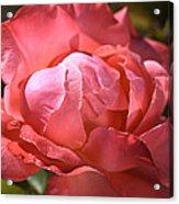 Light On Rose Acrylic Print
