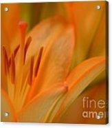 Light Orange Acrylic Print