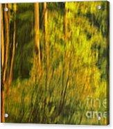 Light Painting Acrylic Print