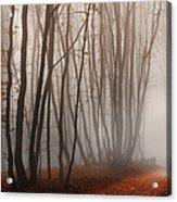 Light Path Acrylic Print by Dobromir Dobrinov