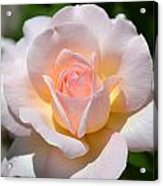 Light Pink Rose Acrylic Print
