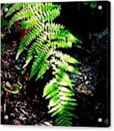 Light Play On Fern Acrylic Print