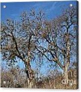 Light Posts And Trees Acrylic Print