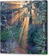 Light Shine Acrylic Print