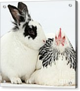 Light Sussex Bantam Hen And Rabbit Acrylic Print