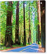 Light Through The Redwoods Acrylic Print