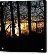 Light Through The Trees Acrylic Print