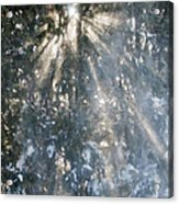 Light Throught The Trees Acrylic Print