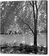Light Tree Acrylic Print