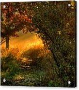 Lighted Path Acrylic Print