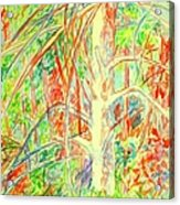 Lightening Struck Tree Again Acrylic Print